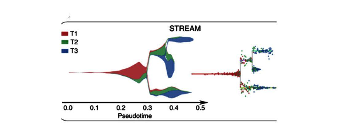 «Ветвящееся время» расскажет о работе генов десятков тысяч клеток одновременно